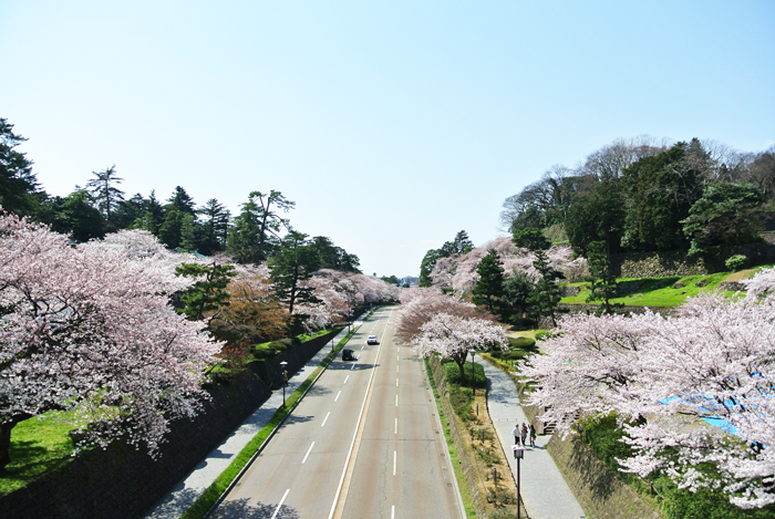桜満開の金沢
