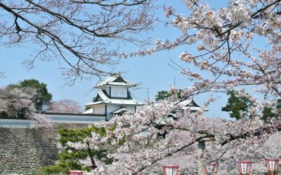桜と金沢城石川門