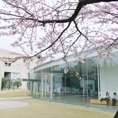 桜と金沢21世紀美術館